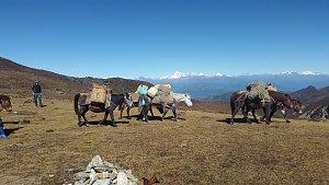 Horse caravan on Dagala trek
