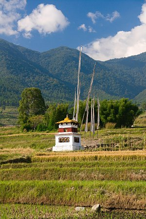 On the way to Chimy lhakhang