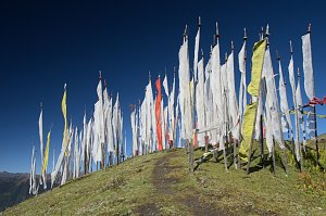 Prayer flags in Chele-la pass