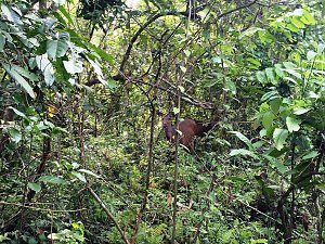 Spotting a deer during Elephant Safari
