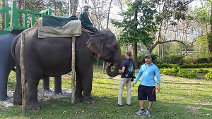 Elephant safari in Manas